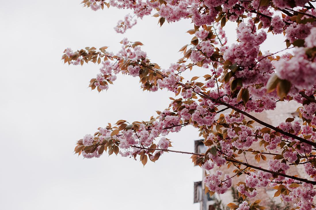 cerisier-paris-seance-photos-couple-marine blanchard photographie